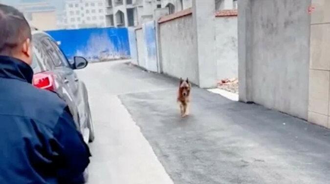 Pies policyjny dosłownie płakał ze szczęścia, gdy spotkał swojego pana po długiej rozłące