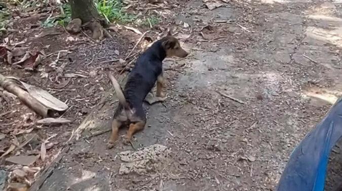 Pies wymyślił plan jak dostawać smakołyki i został sfilmowany. Wideo