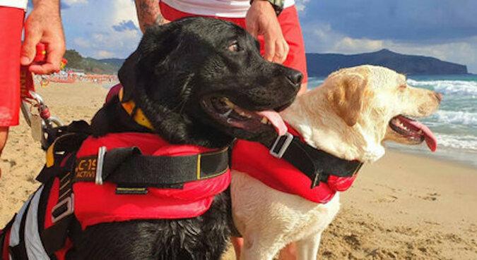 Uradzone, by ratować: trzy psy wyciągnęły 14 osób, które zostały porwane przez prąd rozrywający