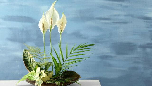 Jakie rośliny domowe mogą przyciągnąć miłość i szczęście do Twojego domu?