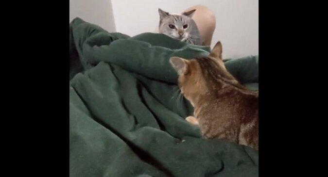 Kot zaatakował przyjaciela, który spał pod kocem i zobacz co się stało później. Śmieszny filmik