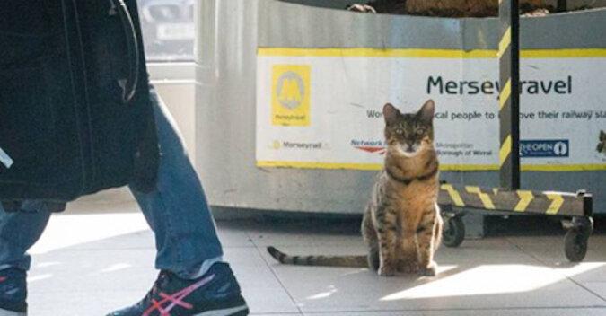 Każdego ranka na dworzec kolejowy w Liverpoolu przychodzi kot, aby porozmawiać z ludźmi