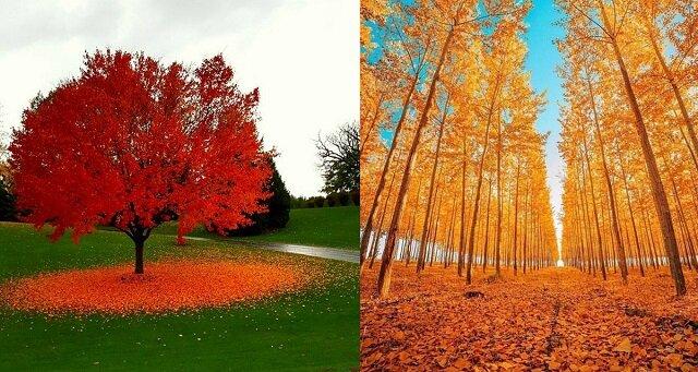 Bajeczny czas: wspaniałe zdjęcia jesiennego krajobrazu