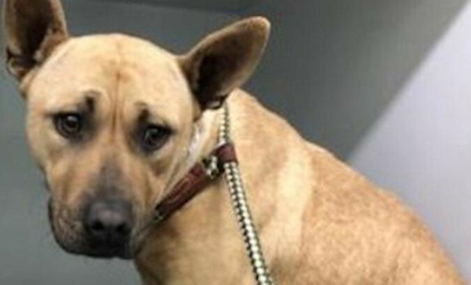 Mężczyzna ratujący psa przed eutanazją uratował jeszcze sześć kolejnych szczeniąt
