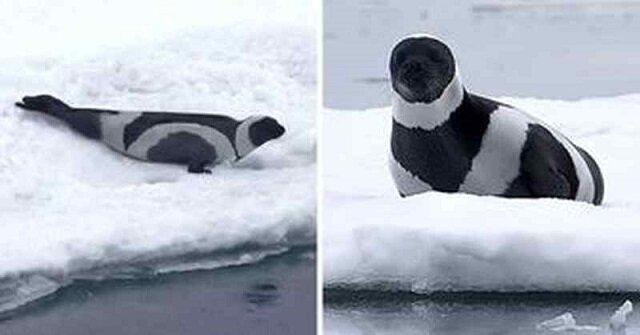 Czarno-białe piękności ze świata zwierząt