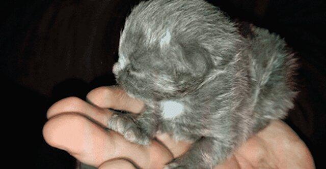 Podczas sprzątania mężczyzna znalazł nowonarodzonego kociaka