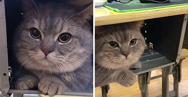 Studentka potajemnie przyniosła kota na lekcje, ponieważ nie chciał być sam w domu