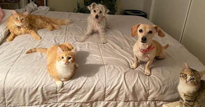 Kobieta zabrała koty do domu tymczasowego, aby znaleźć dla nich nową rodzinę. Ale pies wyraźnie się z tym nie zgadzał