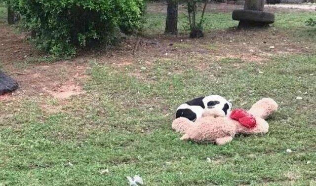 Porzucony pies przytulał pluszowego misia... Nie poruszał się - a wolontariuszka zdała sobie sprawę, że się spóźniła