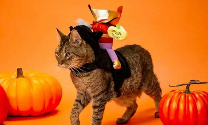 Ponad tuzin pomysłów na to, w co ubrać swojego zwierzaka na Halloween