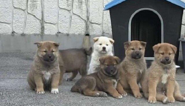 Pies ze swoimi malutkimi szczeniaczkami przyszedł do domu nieznajomego. Mężczyzna był skonsternowany