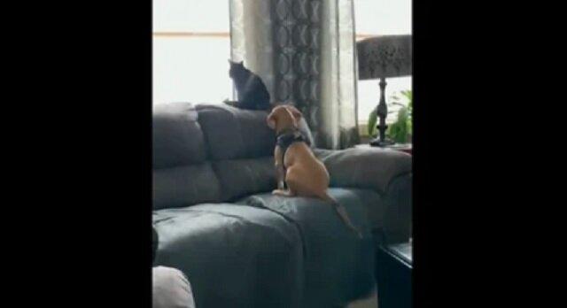 Szczeniak bardzo uroczo przytulił kota wyglądającego przez okno. Wideo