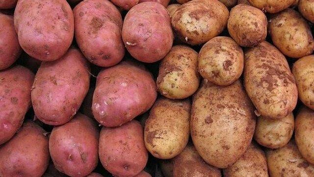 Jaka jest różnica między batatami a zwykłymi ziemniakami: co nadaje się do smażenia, a co do puree