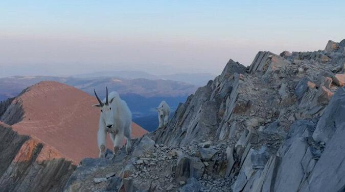 Amerykanin uciekł ze zgiełku na szczyt góry, gdzie odbyło się niezwykłe spotkanie. Wideo