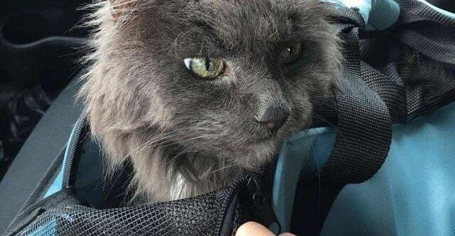 Stary kot został oddany do schroniska. Siedział bardzo cicho i był smutny nie wiedząc, co będzie dalej