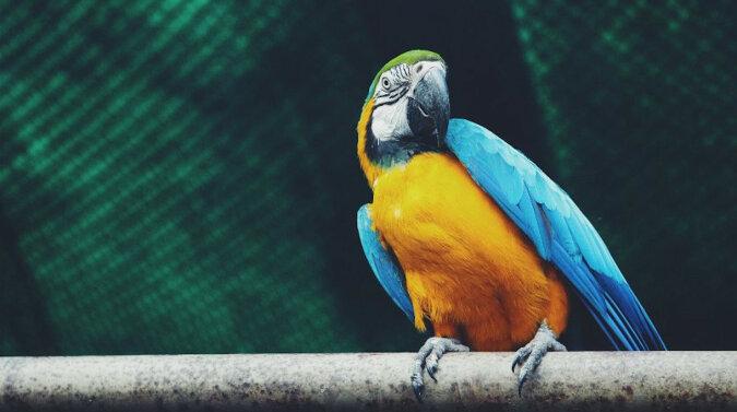 Znakomicie: Papuga akrobata zaskoczyła Internet swoimi umiejętnościami. Wideo