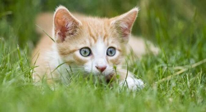 U kotki znikały kocięta, a potem znowu pojawiały się. Właściciel zainstalował kamery - i to właśnie zobaczył