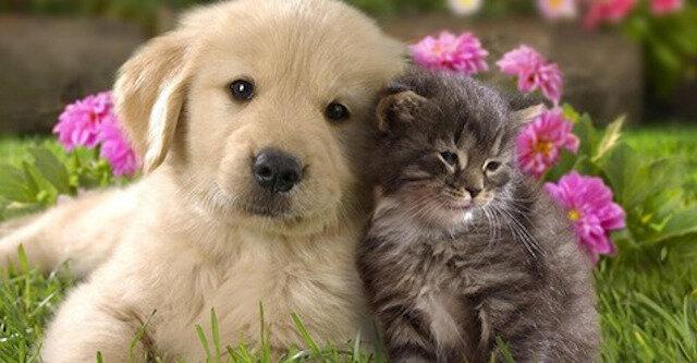 15 absolutnie uroczych zdjęć przedstawiających najczulszą przyjaźń między kotami i psami