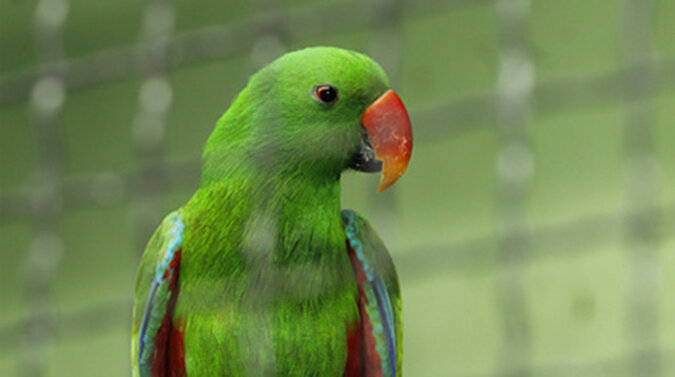 Papuga rozbawiła Internet, gdy znalazła zupełnie nietypowe miejsce do odpoczynku. Wideo