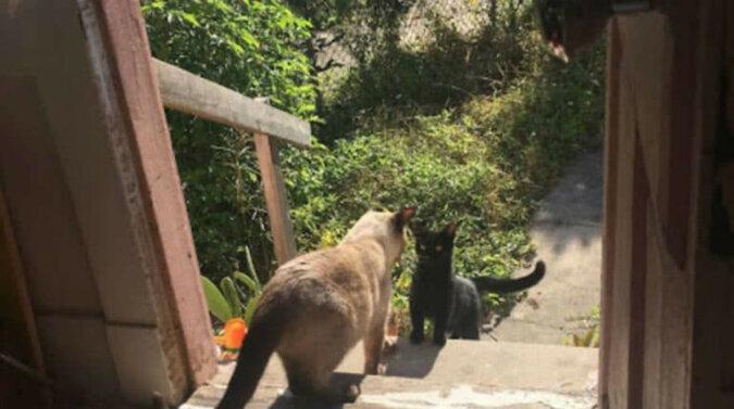 Bezdomna kotka przyszła do cudzego domu o 5 rano i zaczęła miauczeć