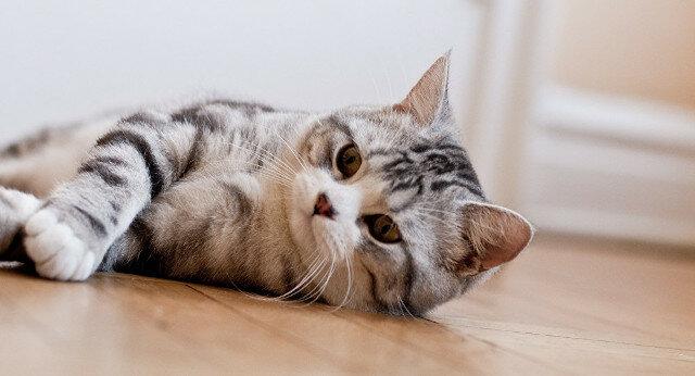"""""""Za co?"""": Kotka z rozczarowaniem patrzy na właścicielkę głaszczącą innego kota. Wideo"""