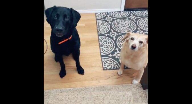 Dziewczyna po raz pierwszy od wielu lat powiedziała psom swoje imię. Filmik z ich niesamowitą reakcją