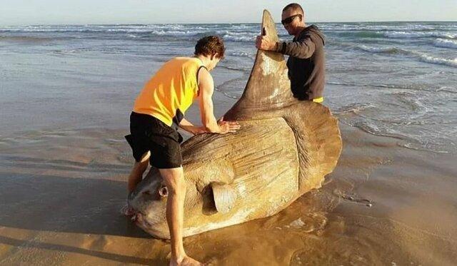 Rybacy myśleli, że to kłoda, a okazało się, że to rzadka ryba