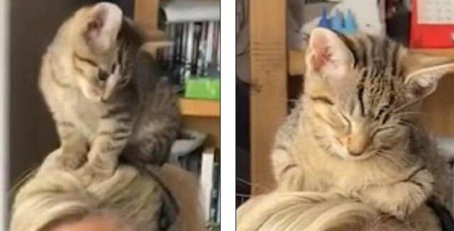 Kociak wspiął się na głowę właścicielki podczas wideokonferencji. I tam zasnął