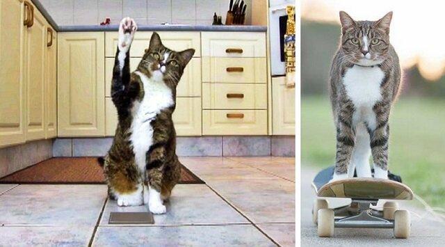 Didja, która została zabrana ze schroniska dla zwierząt, trafiła do Księgi Rekordów Guinnessa jako najmądrzejszy kot świata!