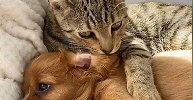 Jak zakończyła się historia, gdy zagubiony szczeniak był chroniony przez bezdomnego kota?