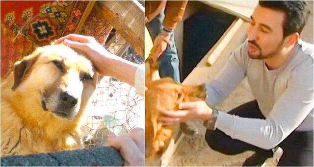 Ten mężczyzna uratował 350 psów! Znajduje je na ulicy, opiekuje się nimi i pomaga przywrócić im zaufanie do ludzi