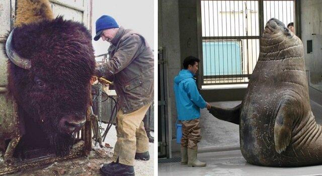 Żywe przykłady na to, że zwierzęta mogą urosnąć do rozmiarów, których nie możemy nawet sobie wyobrazić!