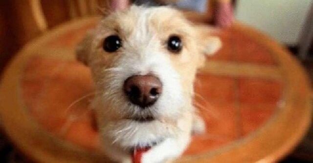 Mężczyzna wpuścił do swojego domu bezdomnego psa, a on mu za to podziękował