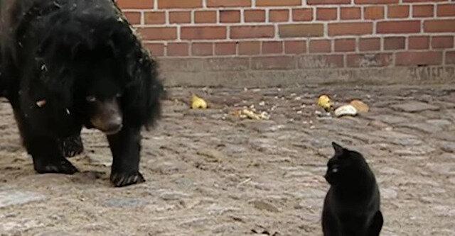 Jak zakończyła się niezwykła 10-letnia przyjaźń niedźwiedzia z kotem