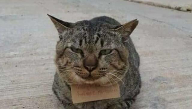 Zabawna historia kota, który uciekł i wrócił z listem zadłużenia na trzy całe makrele