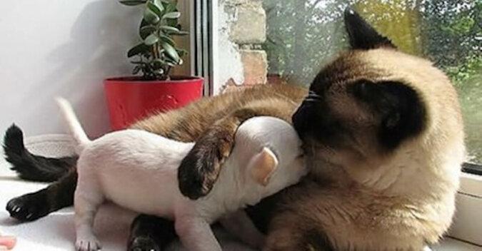 19 zdjęć przedstawiających najbardziej niezwykłą przyjaźń w świecie zwierząt