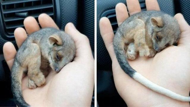 Bardzo ładny widok, który możesz oglądać bez końca: ratowanie małego zwierzęcia