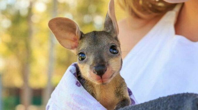 Kilka zdjęć małych zwierzątek, na które nie można patrzeć bez sympatii