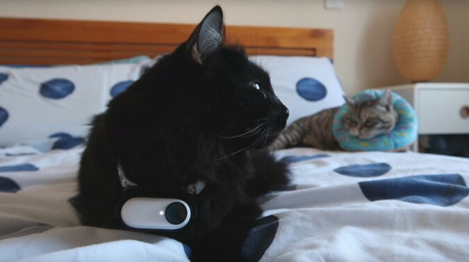 Chłopak przymocował do kota kamerę i obserwował go przez 24 godziny. Co robił zwierzak?