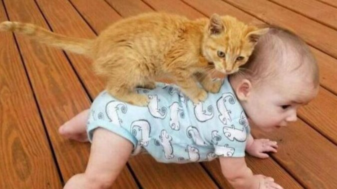 15 dowodów na to, że koty znów dominują w Internecie