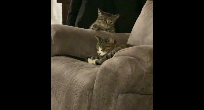 Kot, James Kot: nieudana misja futrzanego przyjaciela rozśmieszyła sieć. Wideo