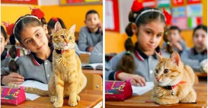 Kot Tombo, uczeń III klasy, zaczął strajkować, kiedy nie pozwolono mu wejść do szkoły