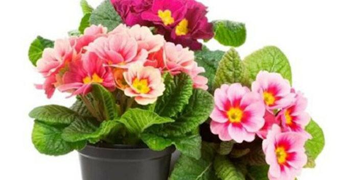 Szczęśliwa roślina talizman dla każdego znaku zodiaku