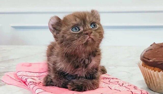 Kociak z uszkodzonymi łapkami i z dziwnymi uszami trafił do dobrej rodziny i wreszcie jest szczęśliwy