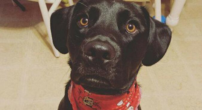 Pies ze schroniska bał się weterynarzy. Wtedy lekarz postanowił mu zaśpiewać