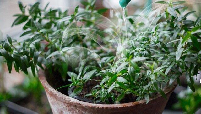 Zbiór pachnących roślin domowych