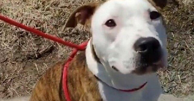 Szczęścia nigdy za dużo: chłopak, zarówno jak i pies, znaleźli rodzinę tego samego dnia