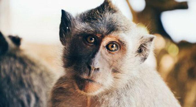 Mała małpka została uratowana z klatki dla ptaków. Teraz ma prawdziwy dom