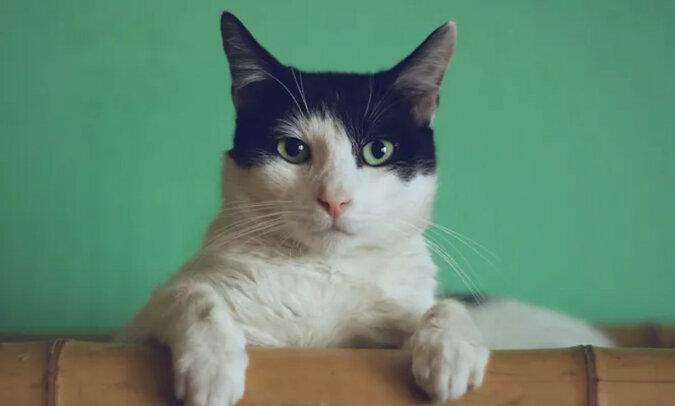 """""""Jak ochroniarz"""": kot zatrzymał dziecko przed wejściem na balustradę balkonu, zachwycając tym widzów"""