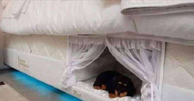 Nowa moda: nisza dla zwierząt w łóżku właścicieli